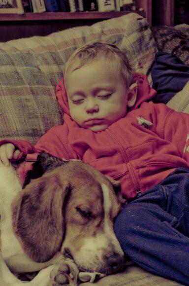 hình ảnh buồn ngủ say bên cạnh chú chó