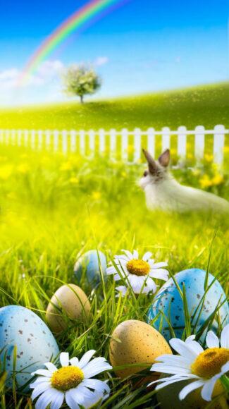 Hình ảnh cầu vồng thỏ và quả trứng