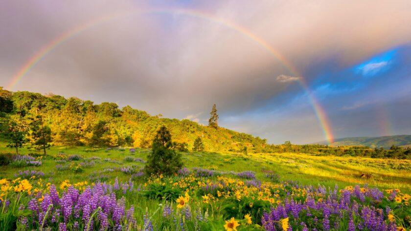 Hình ảnh cầu vồng trên cánh đồng hoa