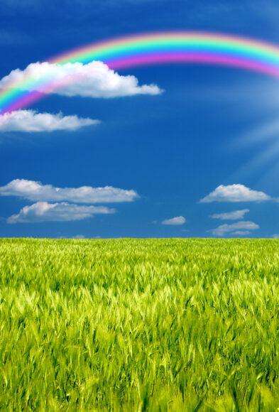 Hình ảnh cầu vồng và cánh đồng xanh mướt