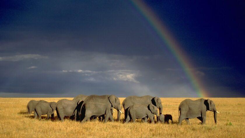 Hình ảnh cầu vồng và đàn voi