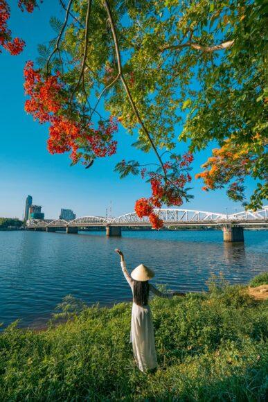 Hình ảnh cây phượng bên cầu
