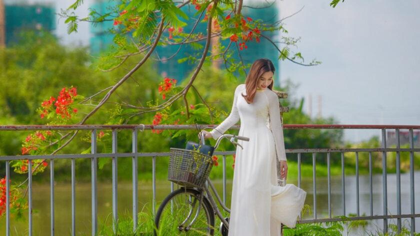 Hình ảnh cây phượng và áo dài
