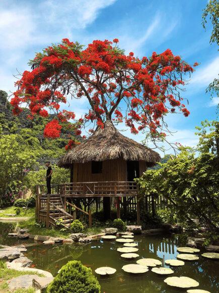 Hình ảnh cây phượng và ngôi nhà bên hồ