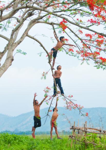Hình ảnh cây phượng và những đứa trẻ nghịch ngợm