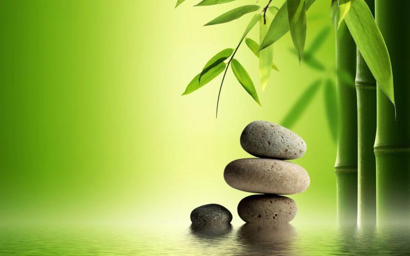 Hình ảnh cây tre và hòn đá