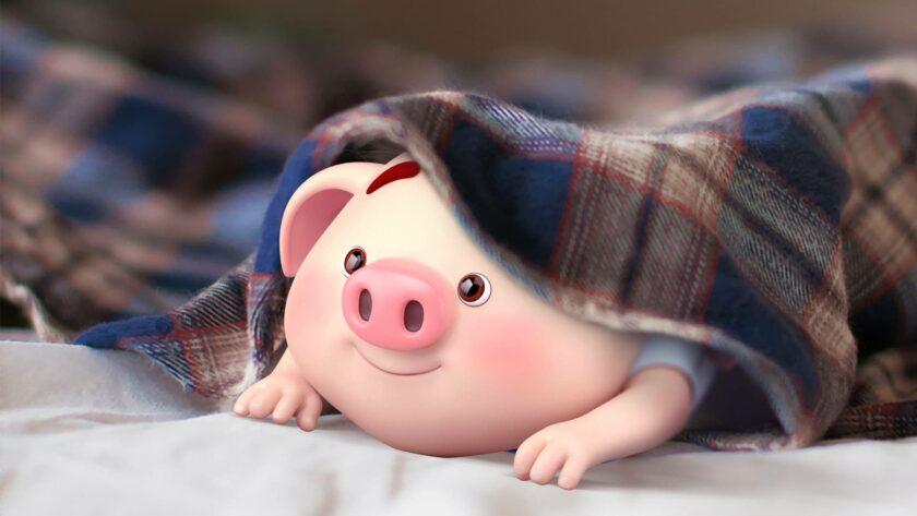 Hình ảnh con lợn nằm dưới chăn