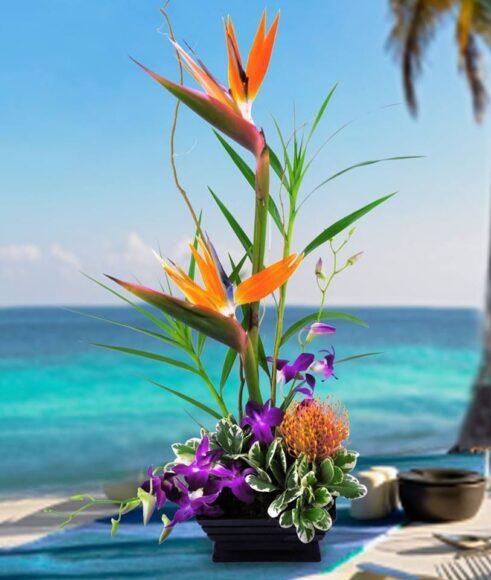 Hình ảnh đẹp về hoa thiên điểu