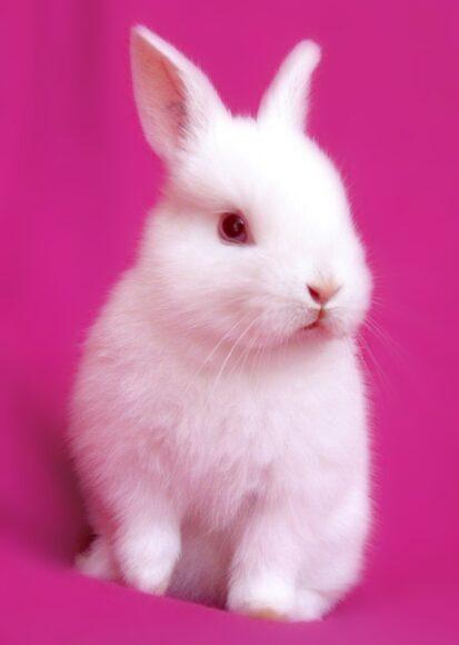 hình ảnh động vật dễ thương con thỏ trắng