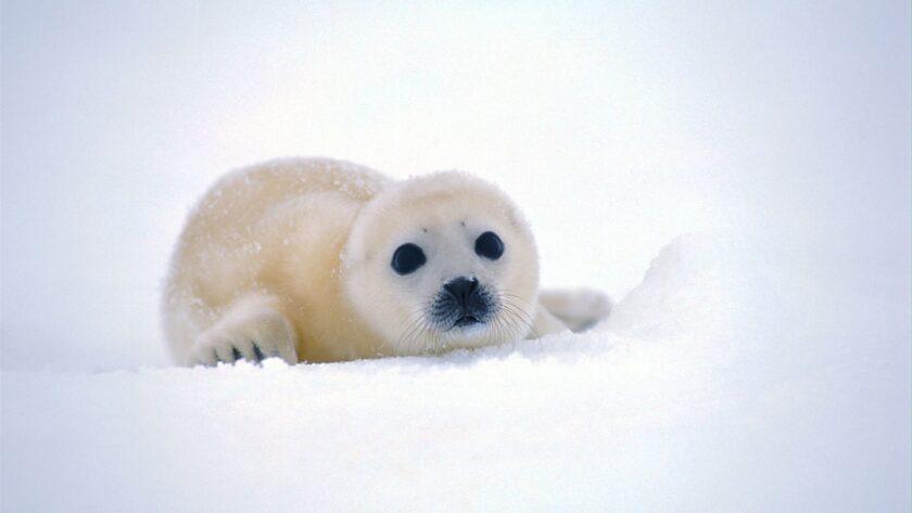 hình ảnh động vật dễ thương nhất thế giới