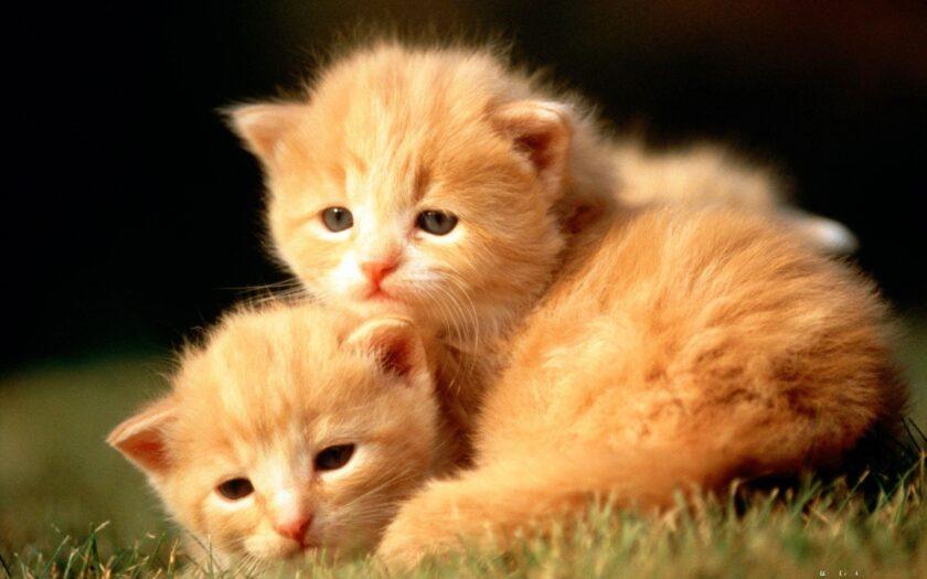 hình ảnh động vật dễ thương về 2 chú mèo