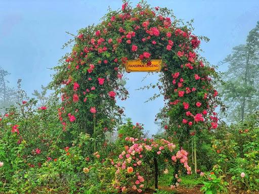 Hình ảnh hoa hồng