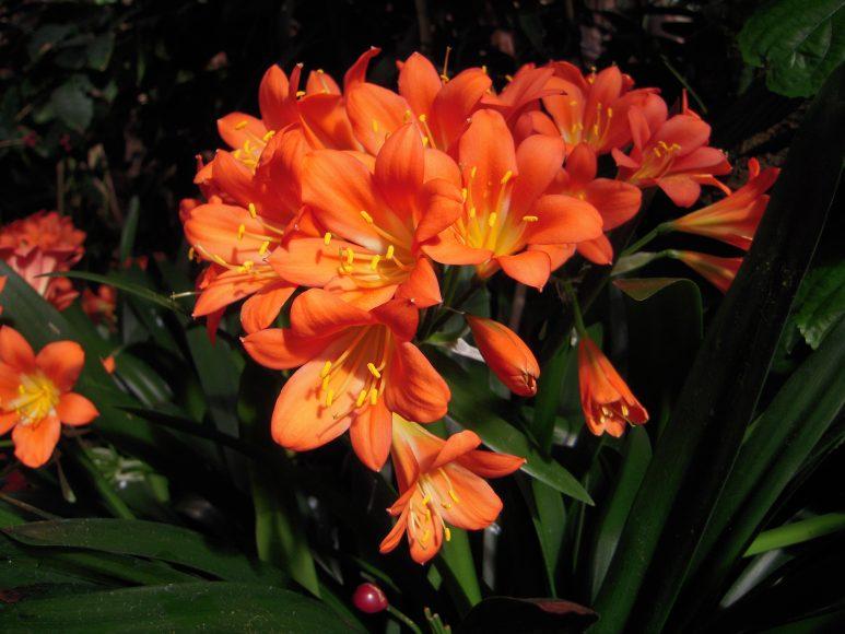 Hình ảnh hoa lan quân tử