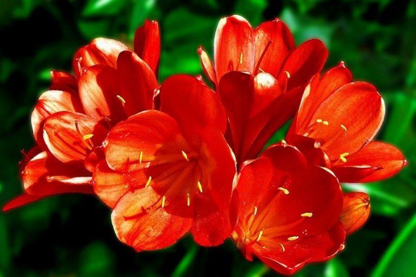 hình ảnh hoa lan quân tử đẹp
