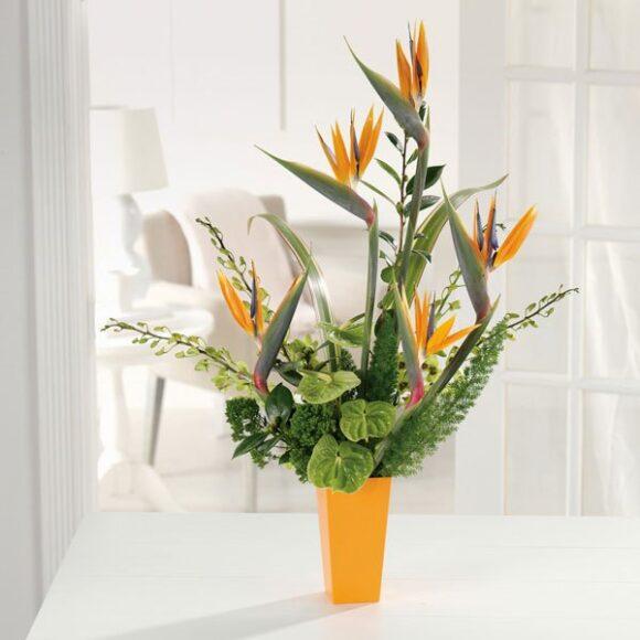 Hình ảnh hoa thiên điểu trang trí