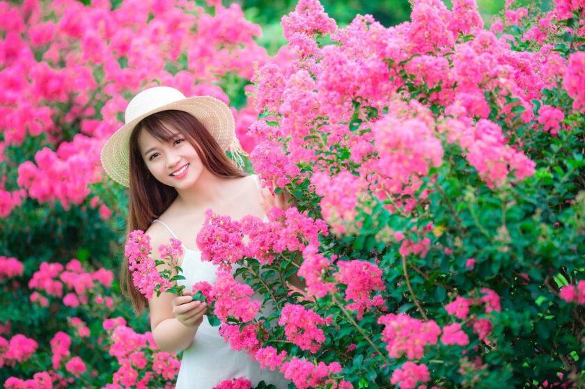Hình ảnh hoa tường vi và cô gái