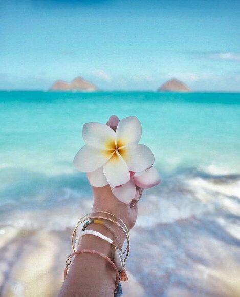 hình ảnh mùa hè và bông hoa