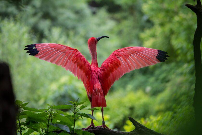 hình ảnh mùa hè và chú chim