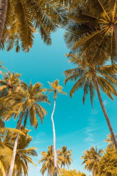hình ảnh mùa hè với hàng dừa