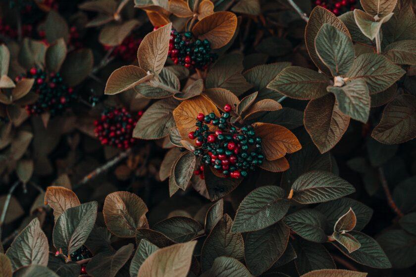 hình ảnh mùa thu buồn