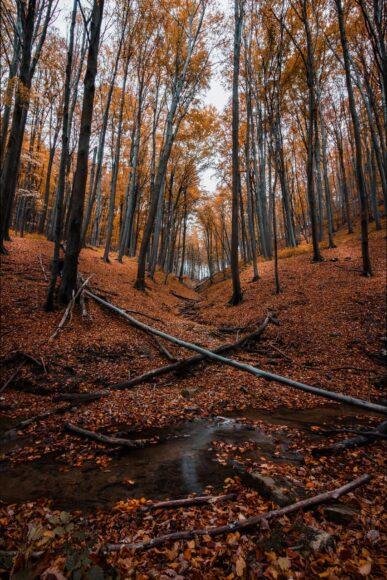 hình ảnh mùa thu rừng cây lá đổ