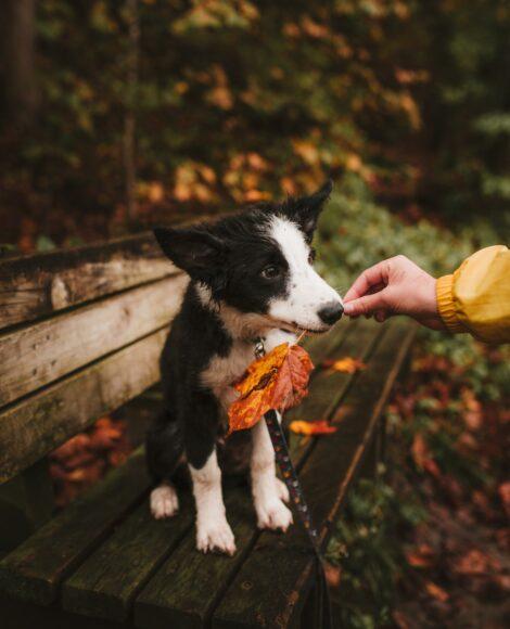 hình ảnh mùa thu và chú chó dễ thương
