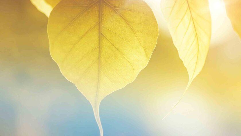 hình ảnh mùa thu về chiếc lá