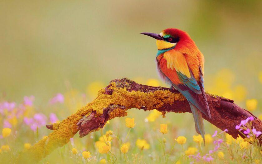 hình ảnh mùa thu về chú chim non