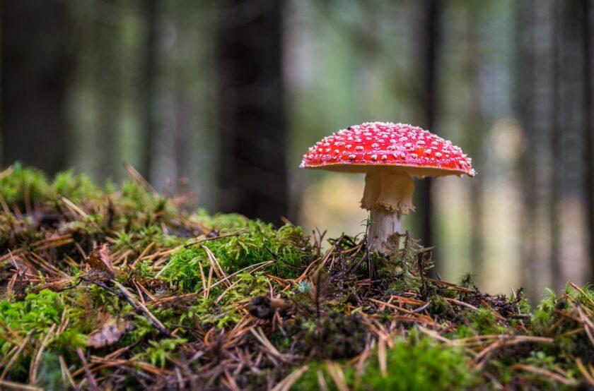 hình ảnh mùa thu với cây nấm