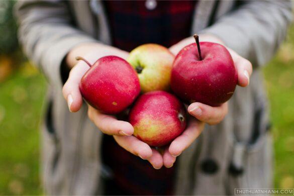 hình ảnh quả táo
