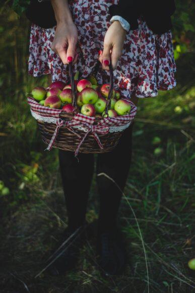 hình ảnh quả táo được người dân thu hoạch