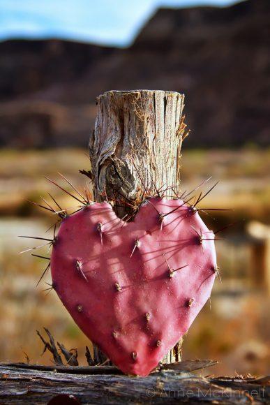 hình ảnh trái tim buồn đau thương đã biến thành xương rồng