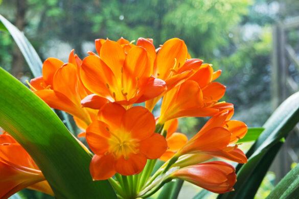 hình ảnh ý nghĩa hoa lan quân tử