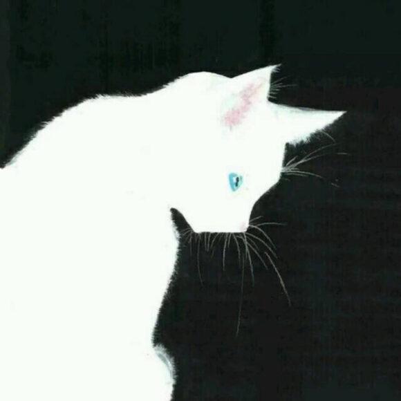 Hình Avatar Trắng về con mèo