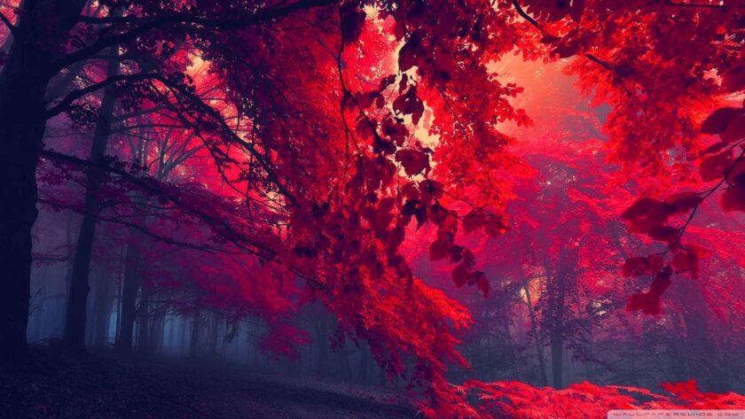 hình nền đỏ đẹp về rừng cây