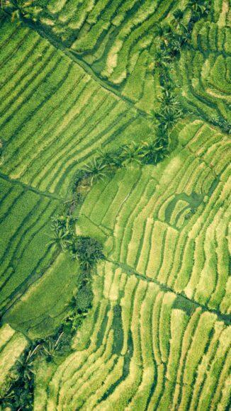 hình nền ipad thiên nhiên xanh