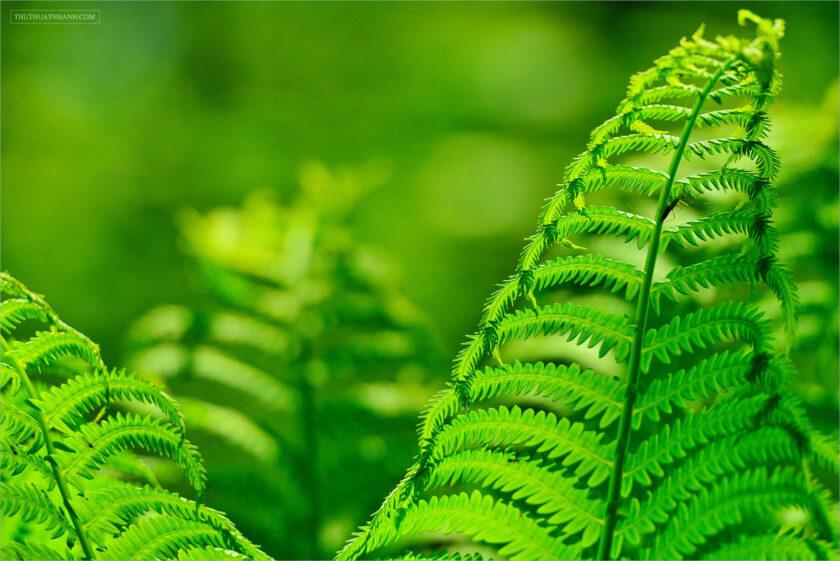 hình nền lá cây dương xỉ