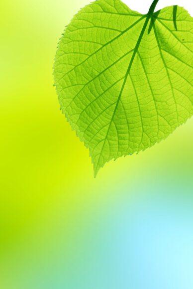 hình nền lá cây màu xanh ngọc