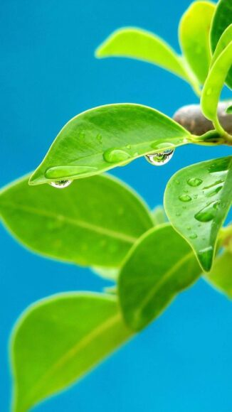 hình nền lá cây và giọt nước
