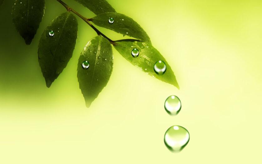 hình nền lá cây xanh đẹp nhất