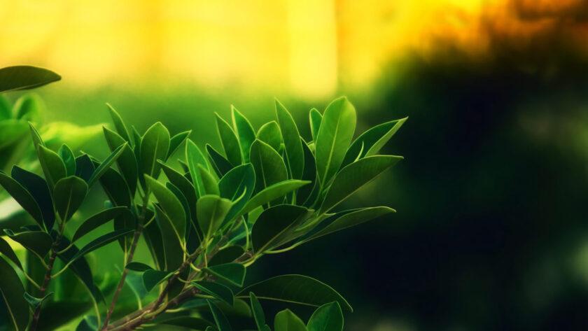 hình nền lá cây xanh đẹp nhất cho máy tính