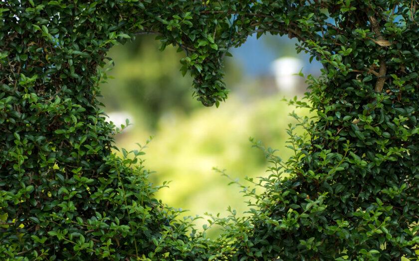 hình nền lá cây xêp hình trái tim