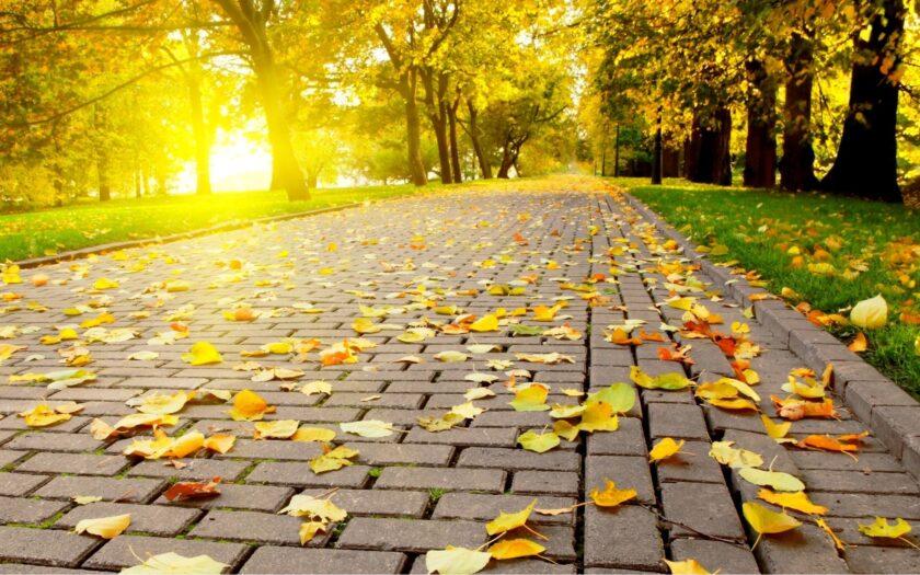 hình nền lá mùa thu và nắng vàng trên đường công viên