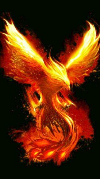 hình nền lửa về chim phượng hoàng