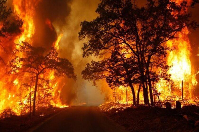 hình nền lửa về rừng cây bị đốt cháy