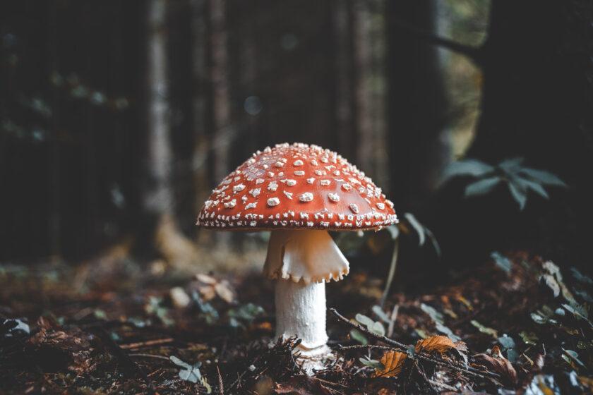 hình nền macbook về cây nấm trong rừng