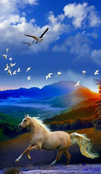 hình nền may mắn về con ngựa