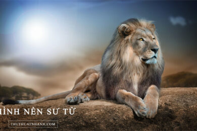 hình nền sư tử tuyệt đẹp