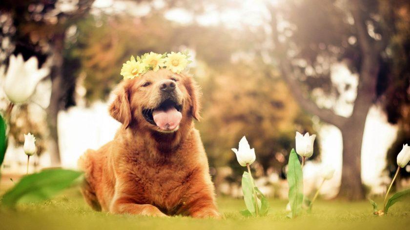 hình nền vui nhộn về chú chó