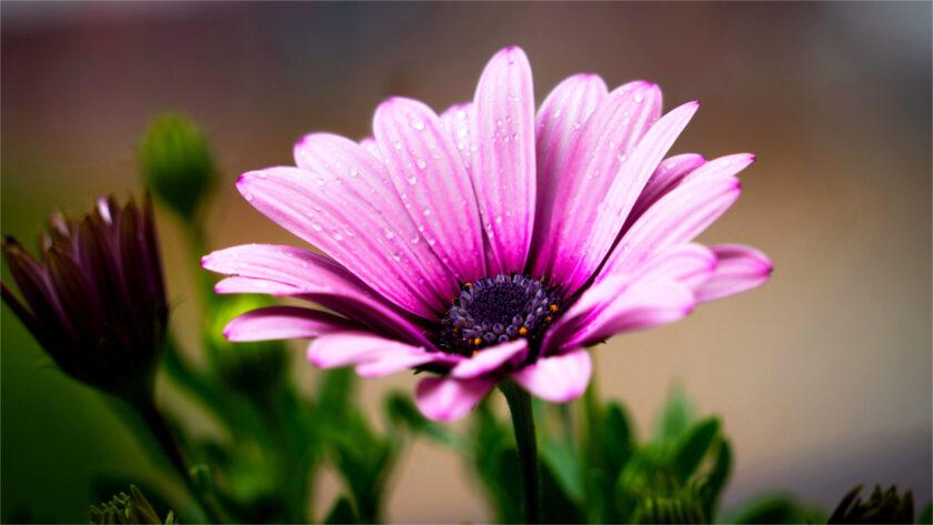 hình nền win 10 đẹp hình một bông hoa
